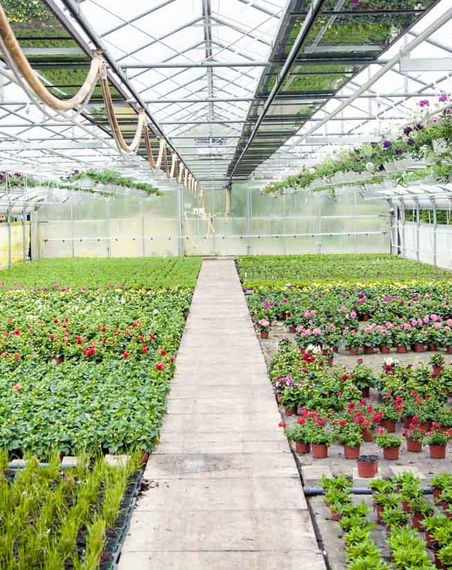 השקעה בתחום החקלאות באיחוד האמירויות