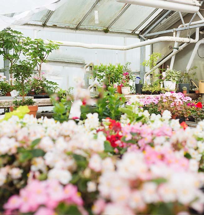 חנויות פרחים באיחוד האמירויות